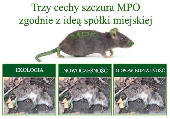 Szczur z MPO